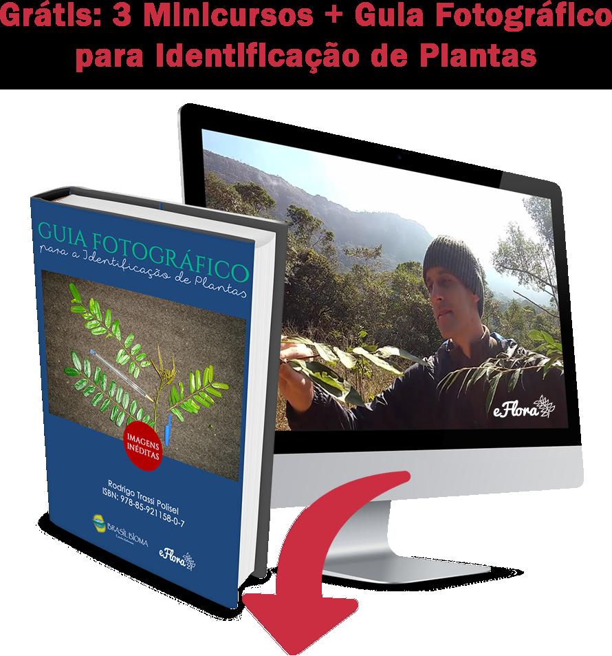 Guia Fotográfico para Identificação de Plantas