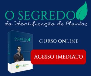 identificação de plantas curso online