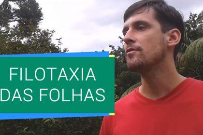 Filotaxia das Folhas