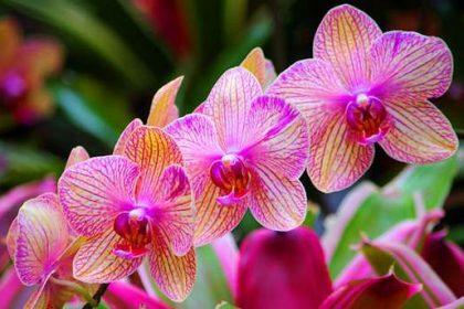 Diferentes Tipos de Orquídeas [Com o Especialista!]
