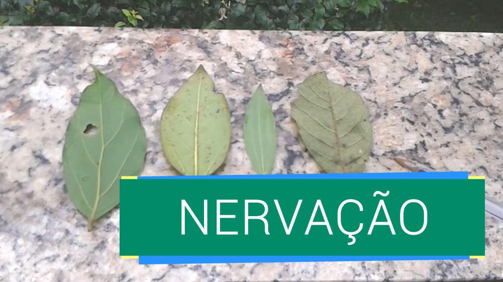 Tipos de Nervação de Plantas