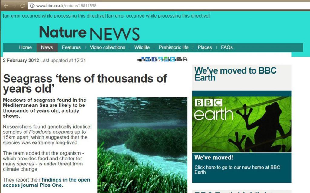8421179fe7 As plantas superiores marinhas - eFlora Web