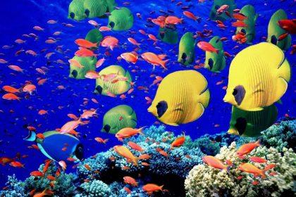 Cardumes de Peixes