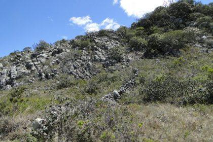 Um Cerrado Rupestre no Sudeste de Minas Gerais - Campos Rupestres
