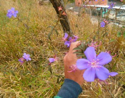 Plantas nativas no paisagismo
