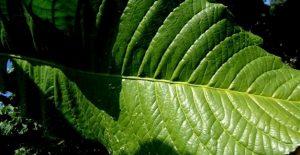 meu cantinho verde2