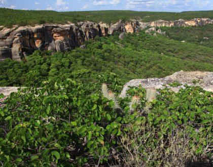 Em seu dia, a Caatinga pede socorro