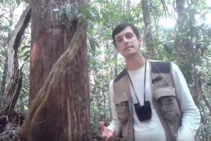 Diferenças entre Floresta Amazônica e Atlântica