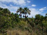 10 árvores típicas do Cerrado