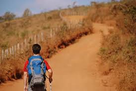 Pelas estradas do Brasil: Uma expedição fitogeográfica do Sudeste ao Nordeste do país