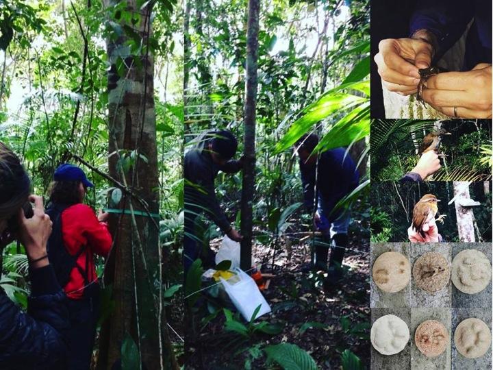 Algumas atividades práticas do Curso de Fauna e Flora.