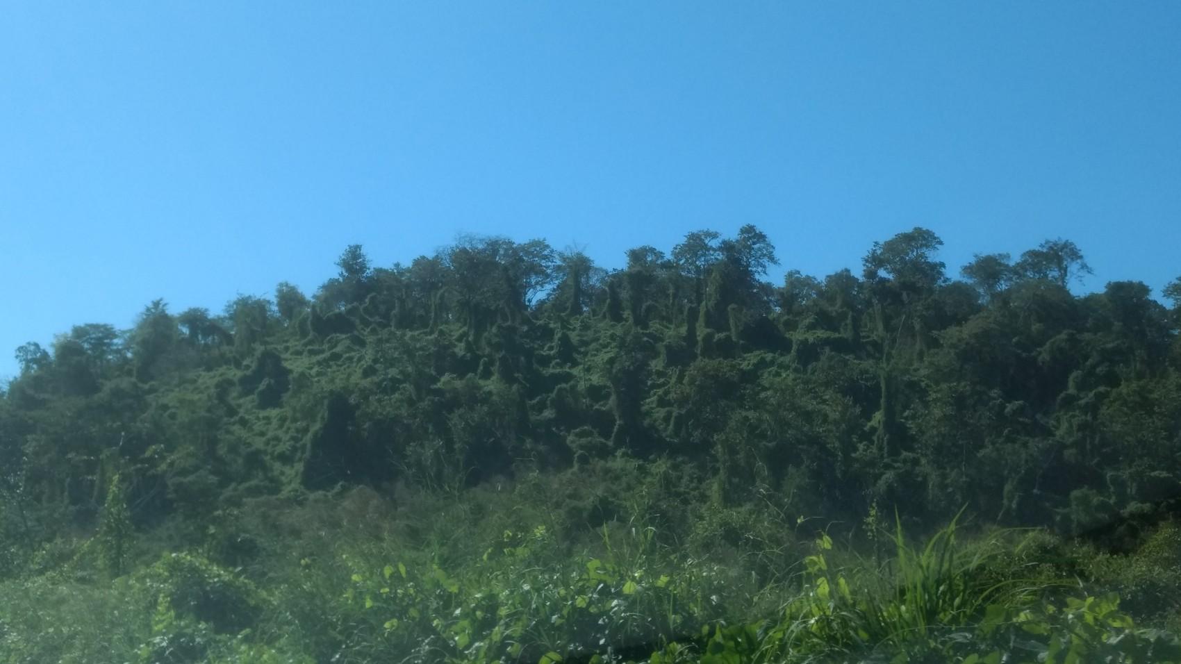 Figura 9 – Trecho de Floresta Semidecídua com sinais de degradação devido ao efeito de borda entre Teresina e Altos, a caminho do litoral do Piauí (BR343). Fonte: Arquivo pessoal.