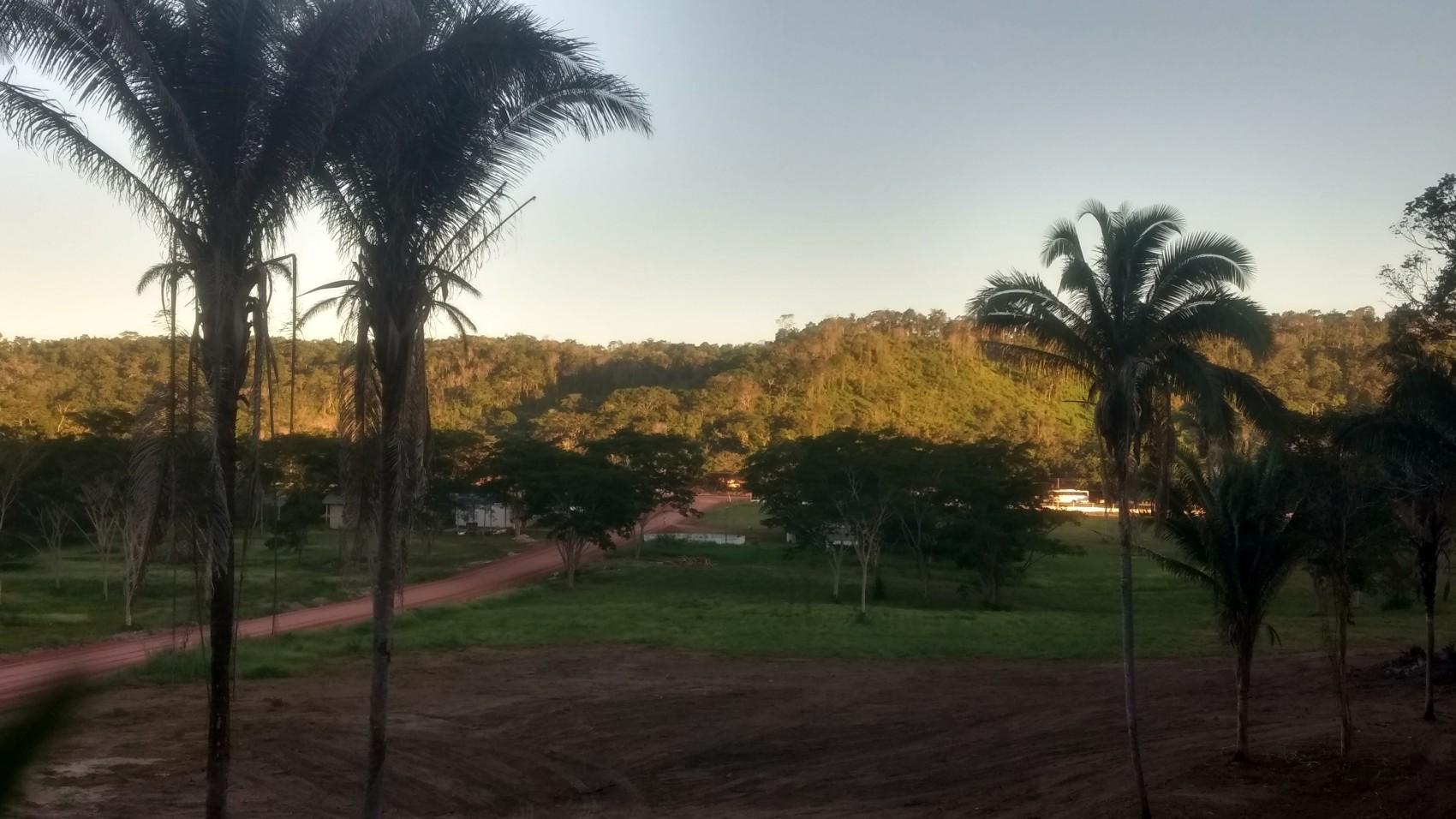 Figura 10 – Paisagem próxima à capital do Piauí, com a presença de Florestas Semidecíduas com a presença marcante da palmeira babaçu (Attalea speciosa). Fonte: Arquivo pessoal.