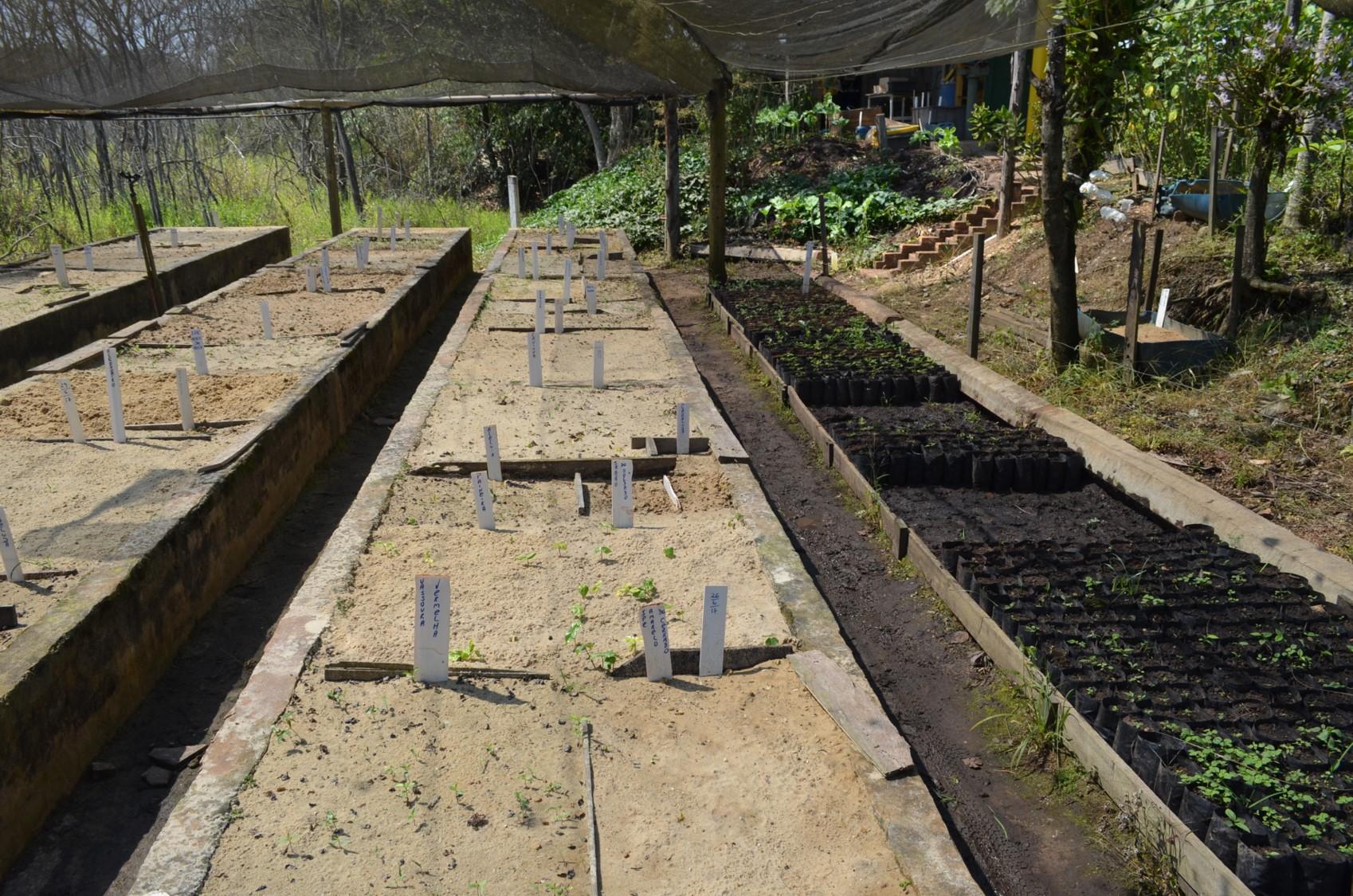 Foto 3 – Trecho do Viveiro destinado à germinação de sementes de espécies florestais com a identificação da espécie e tratamento germinativo no Viveiro Árvores Brasileiras, em Iperó, SP.