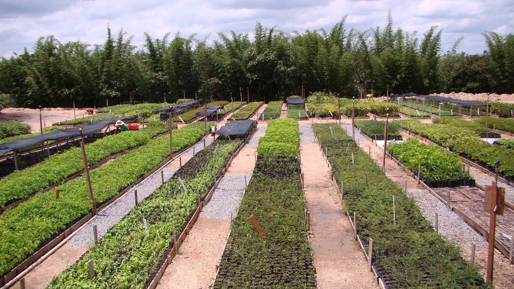 Foto 2 – Canteiros de mudas nativas no Viveiro Árvores Brasileiras, parceiro do Programa Muda Certa (Foto: Suzana Aleixo).