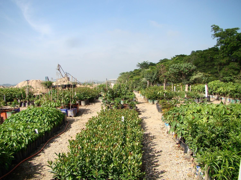Foto 1 – Mudas nativas em desenvolvimento no Viveiro Árvores Brasileiras, integrante do Programa Muda Certa (Fonte: Suzana Aleixo).