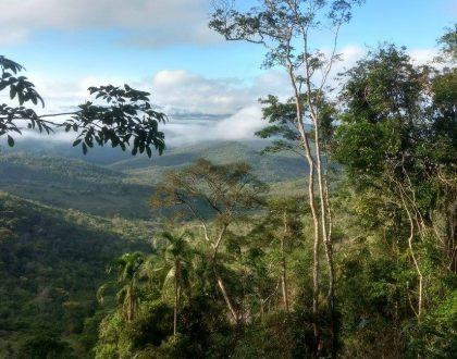 Novas edições dos cursos presenciais da Brasil Bioma