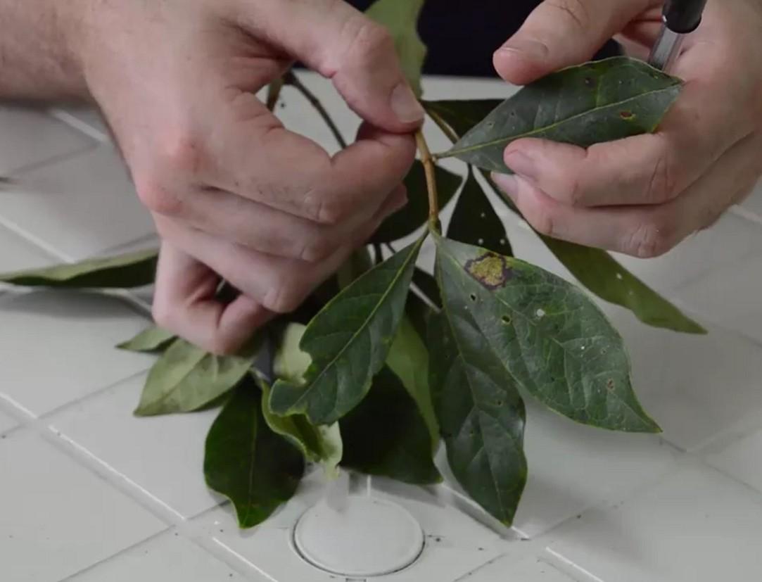 Como reconhecer uma planta