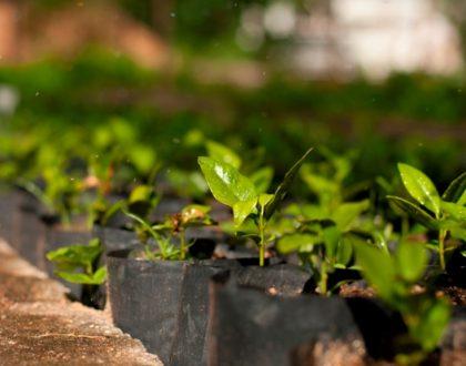 Restauração Ecológica - Restauração Ambiental
