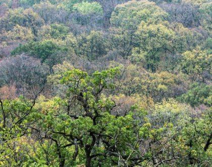 O sistema IBGE e a classificação da vegetação