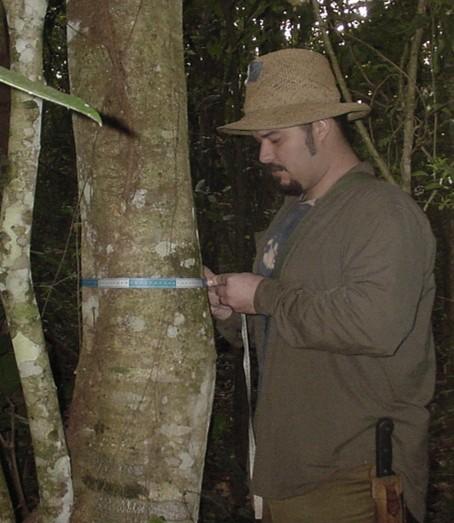 Estudos de inventário florestal