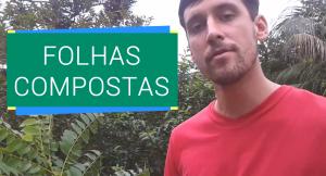 Botânica - Folhas Compostas   Brasil Bioma