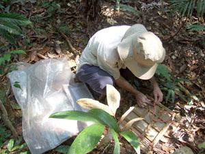 Como Fazer Coleta e Herborização de Plantas