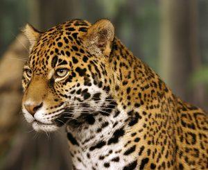 Defesa da Fauna