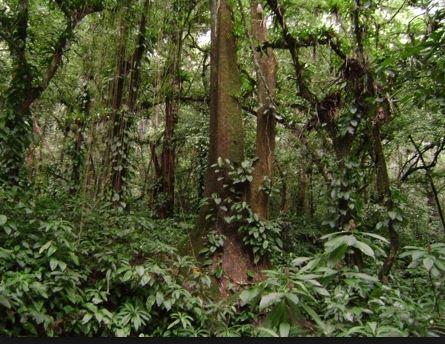 Fitogeografia - Floresta da Encosta Atlântica