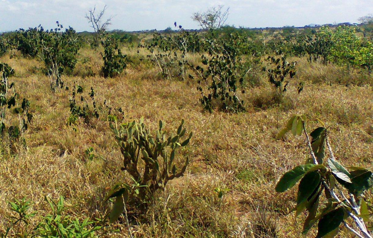 Fatores de degradação no Cerrado brasileiro
