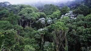 10 Árvores raras da Mata Atlântica