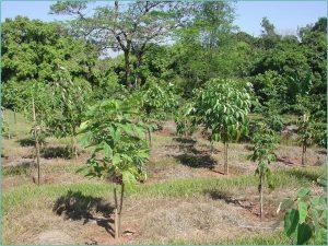 plantas aadultinhas
