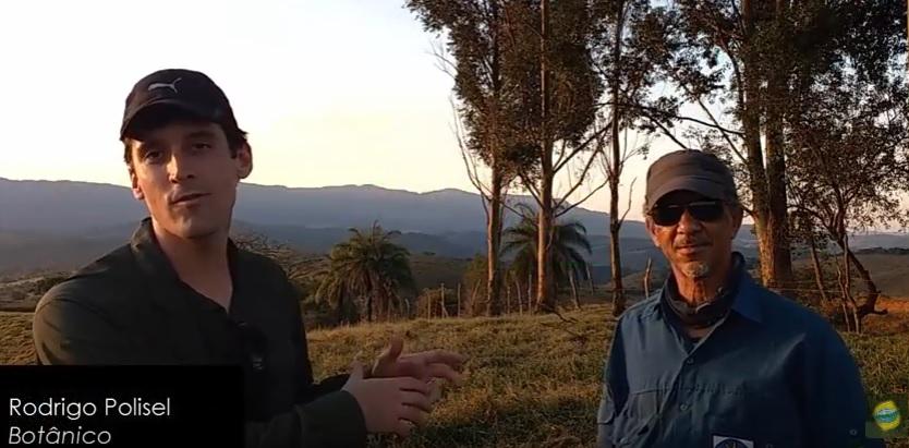 Conhecendo a flora do Sul de Minas