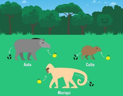 Fauna e riqueza de espécies vegetais