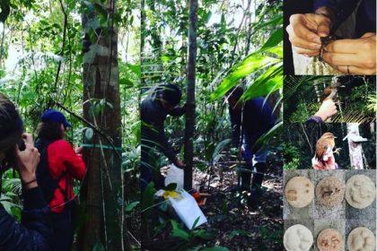Cursos presenciais e on line da Brasil Bioma