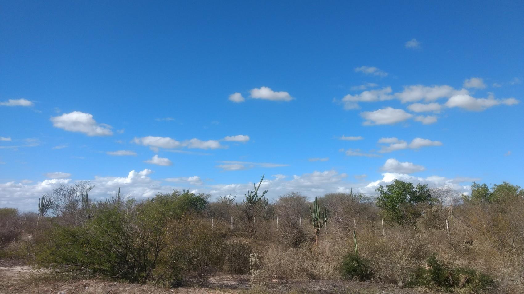 Caatinga arbustivo-arbórea próximo a Itaberaba (BA).