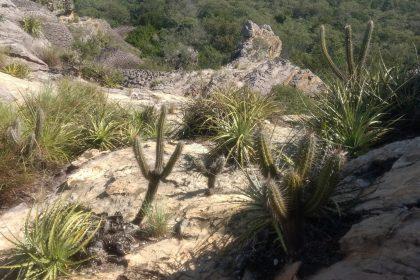 Análise da flora do trecho Petrolina (PE) a Barra Grande (PI)
