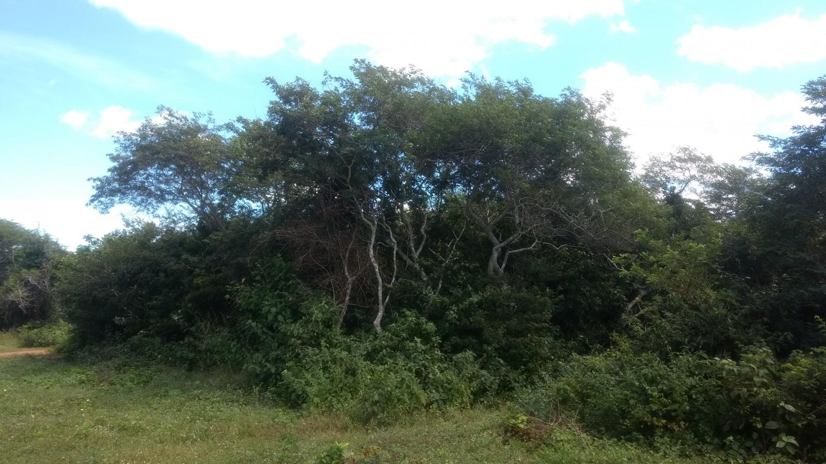 Figura 16 – Trecho de Floresta próximo à costa atlântica em Luís Correia (PI). Fonte: Arquivo pessoal.