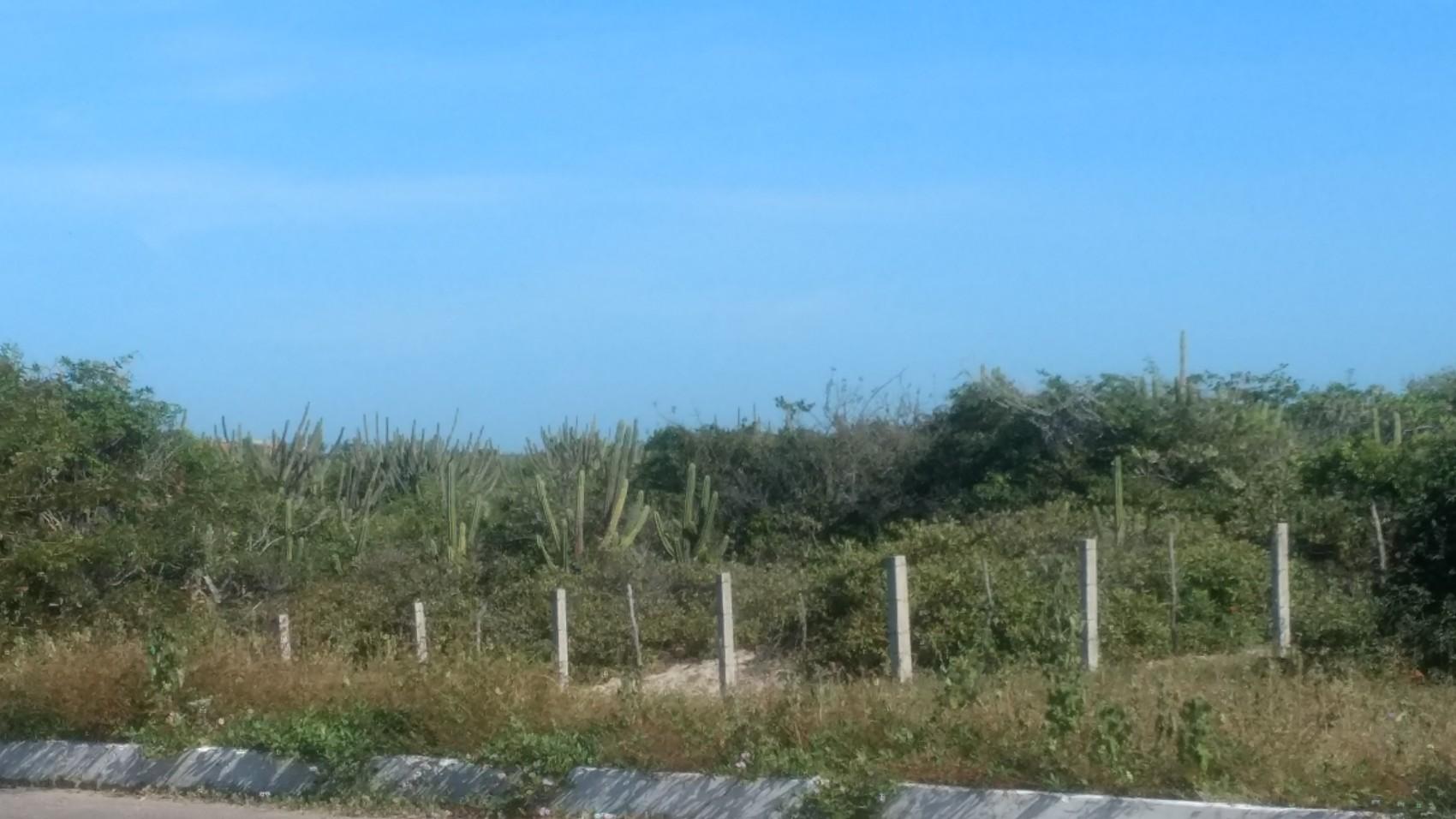 Figura 17 – Formação arbustivo-arbórea com predomínio de Cereus spp. (mandacaru) no litoral piauiense, em Luís Correia (PI). Fonte: Arquivo pessoal.