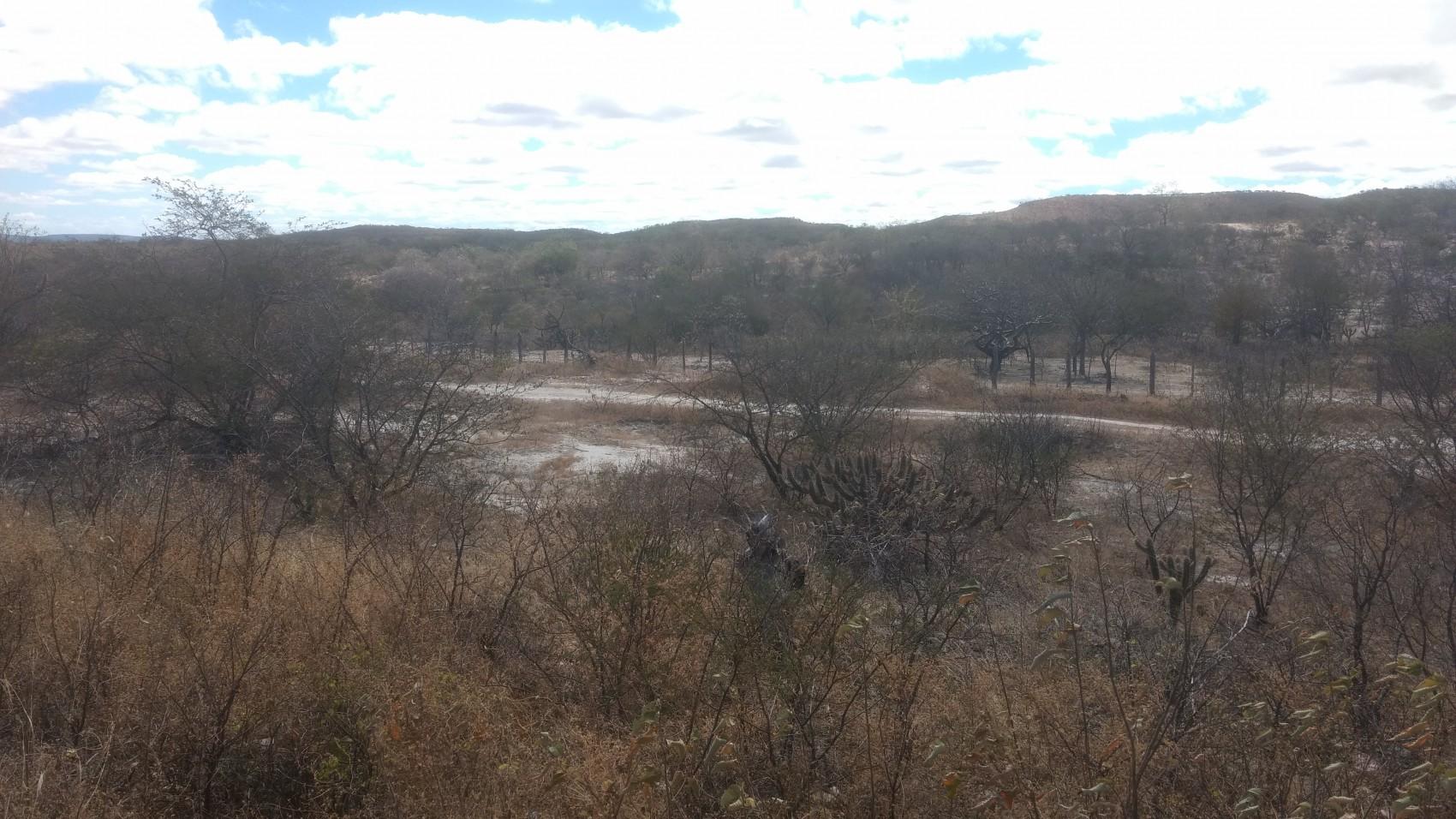 Figura 4 – Foto de recho de Caatinga arbustiva com influência do pastejo de bode, com presença maciça de Pilosocereus gounellei (xique-xique), além de Mimosa spp. e Cynophalla flexuosa. Altitude do trecho: 325 m