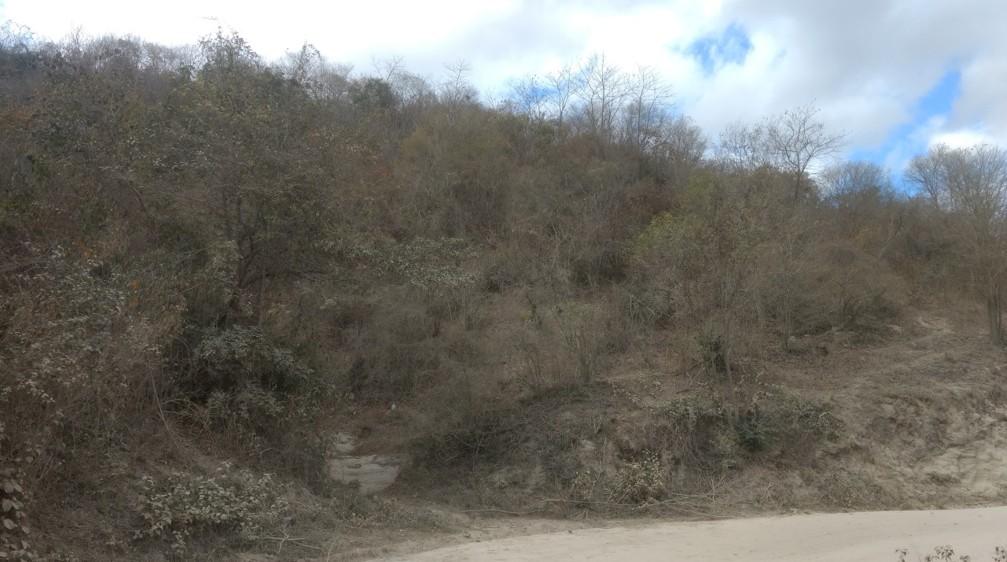 Fisionomia de Caatinga arbustiva em zona de transição no Norte de Minas Gerais com predomínio arbustivo-arbóreo de baixa estatura.