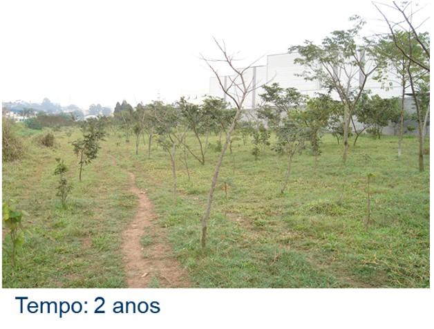 Restauração Ecológica Ambiental