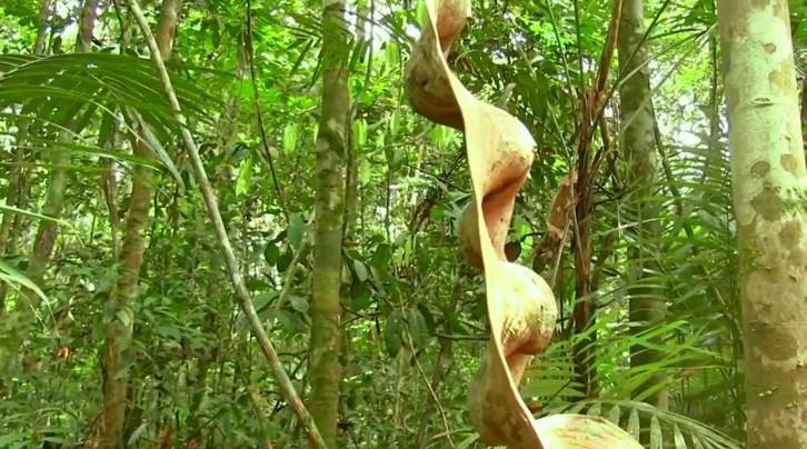 escada-de-macaco