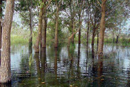 4 Estudos de Caso que atestam as falhas do sistema do IBGE para classificação da vegetação Brasileira