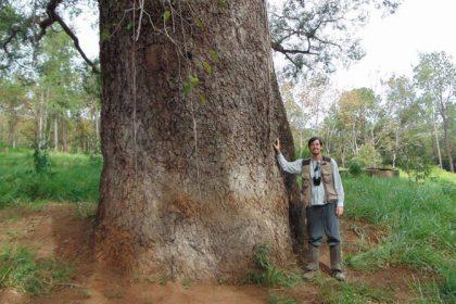 O erro mais comum no Cadastramento Arbóreo