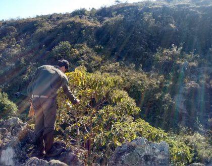 Estudos Ambientais e a Preservação do Meio Ambiente
