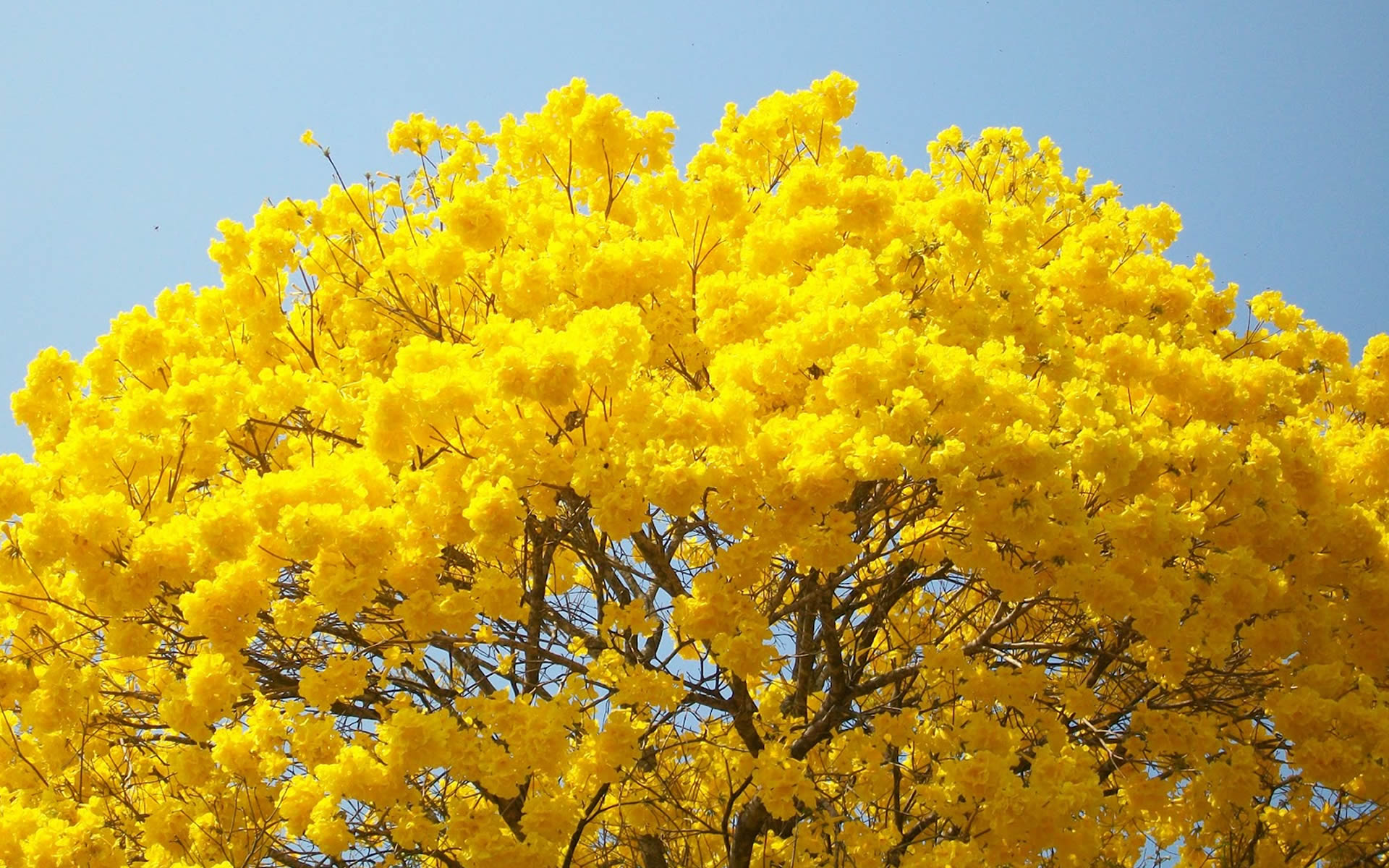 Plantas Em Extinção: Conheça as Principais no Brasil