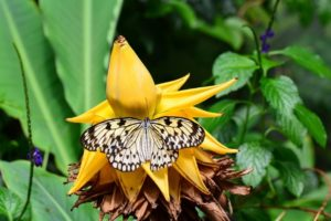 Biodiversidade brasileira