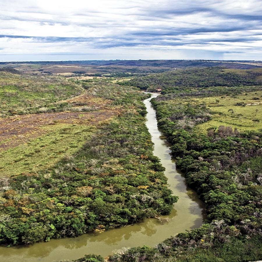 Mata ciliar em processo de restauração na Bacia do Descoberto (MG)