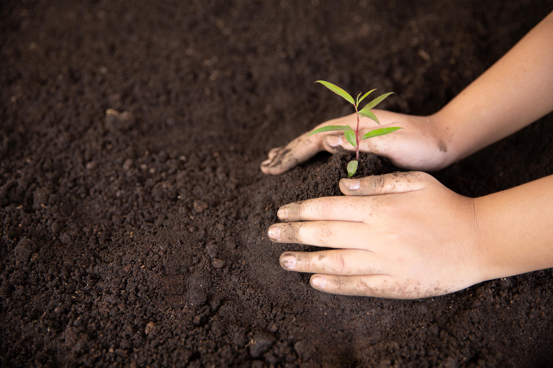 Coleta de sementes e produção de mudas